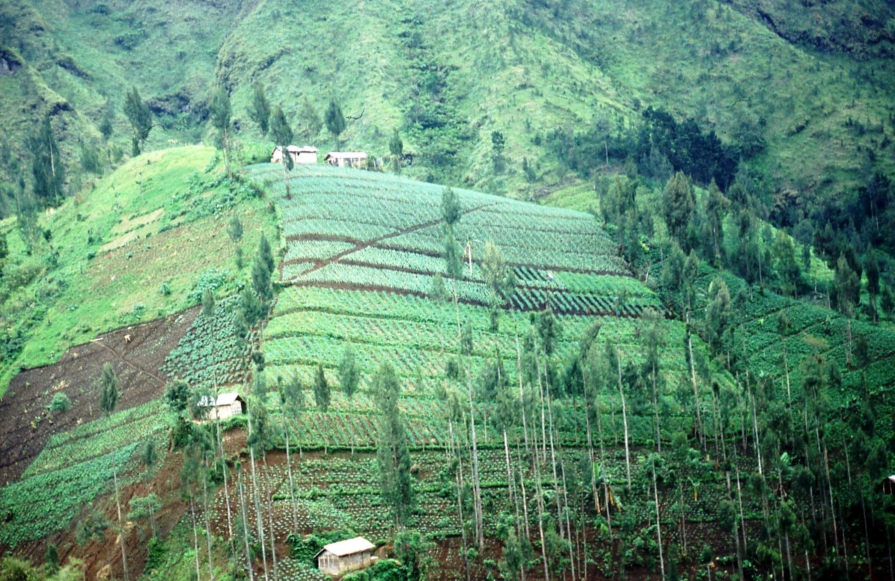 Java: Landbouw in de bergen