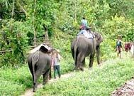 thailand mae wang