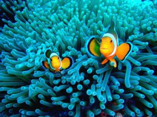 Manta Dive9