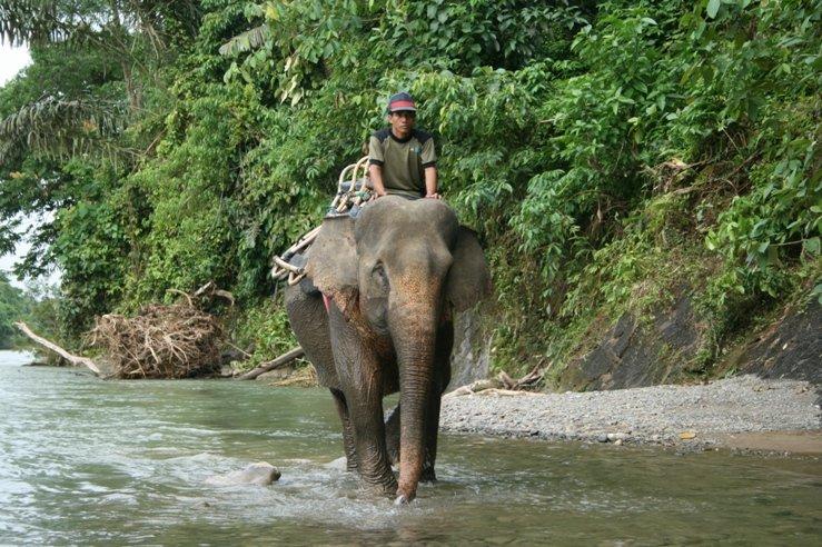 Olifanten jungletrek