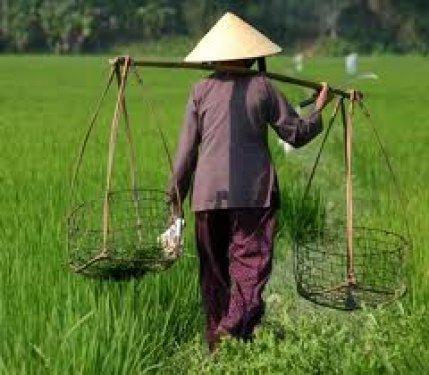 Vietnam man aan het werk in de rijsvelden