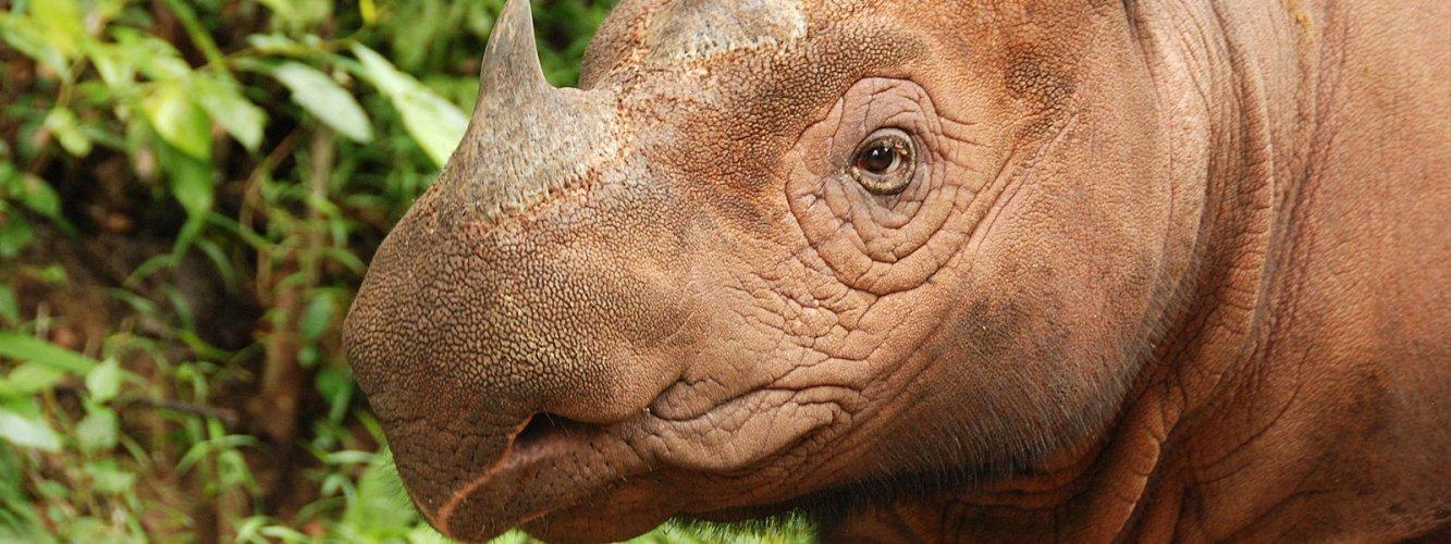 Way Kanan Rhino