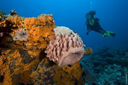 Gili diving - Hans reef