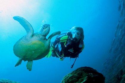 Gili diving - Meno wall