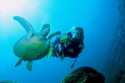 Gili diving - Meno wall