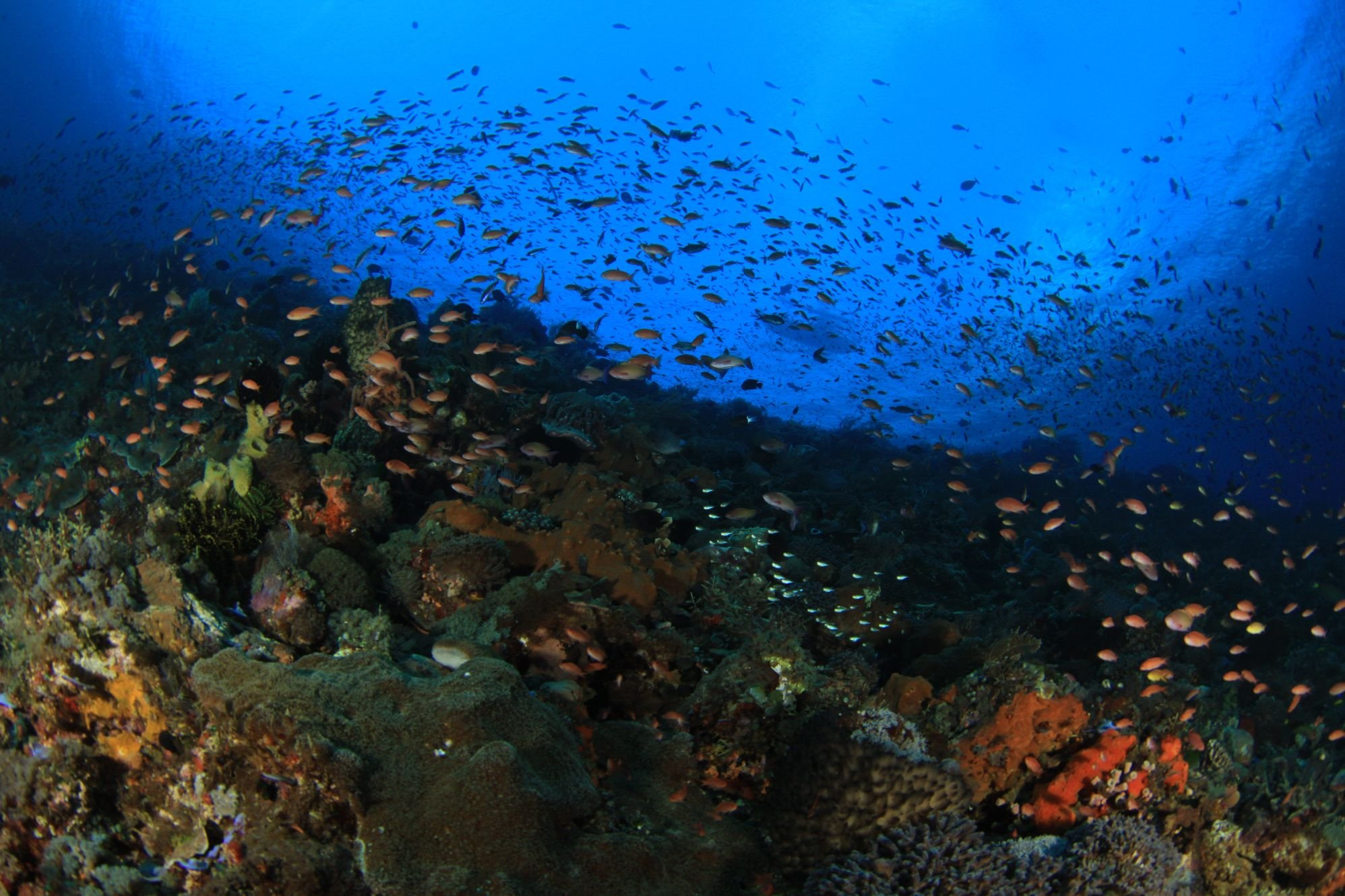 Alor under water