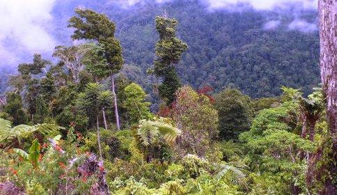Arfak mountains
