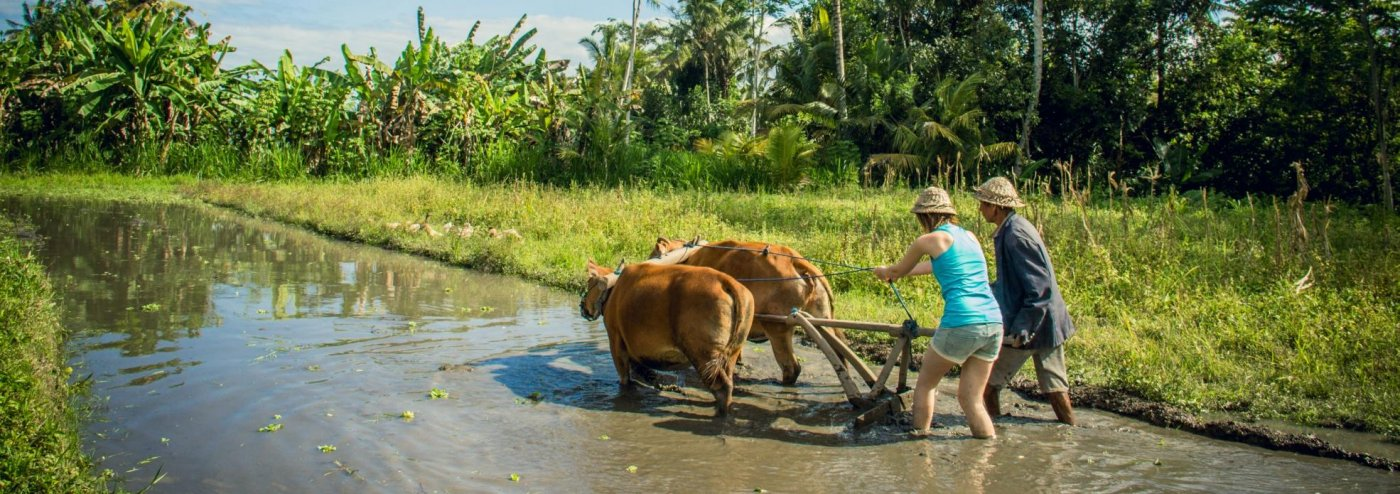 Bali Bangli